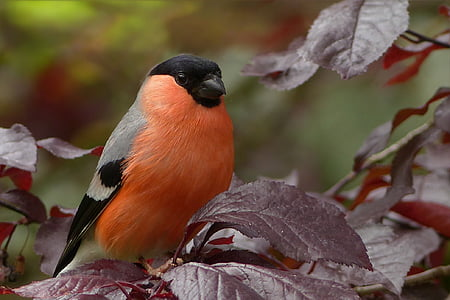 zimovka, ptica, sjedi, drvo, vrt, životinje u divljini, životinja životinje