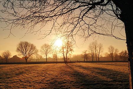 sunrise, cold, iced, hoarfrost, morgenstimmung, winter, frozen