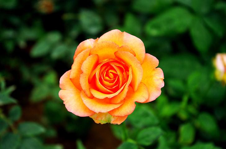bloem, mooie, plant, botanische tuin