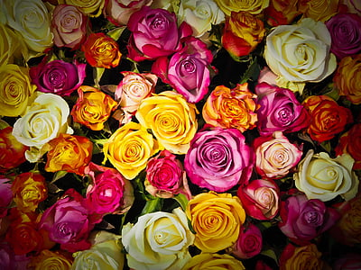 roses, bouquet of roses, bouquet, flowers, white, pink, orange roses