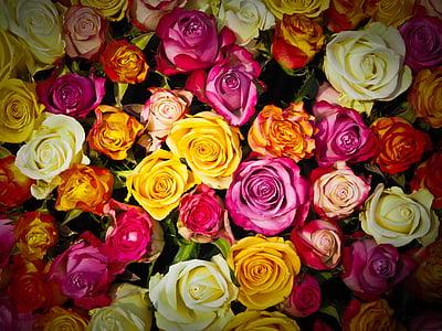 Hoa hồng, bó hoa hồng, bó hoa, Hoa, trắng, màu hồng, Hoa hồng cam