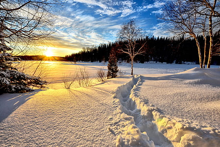 winter landscape, sunset, cold, snow, trees, nature, white