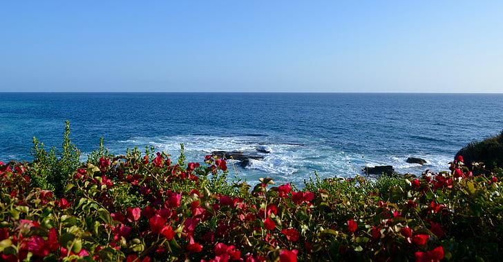 platja, oceà, Mar, riba, vista de la Costa, natura, flor