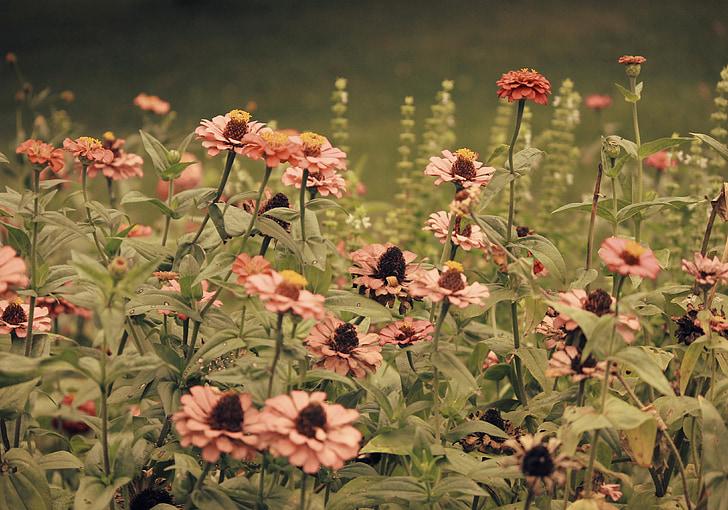 kruiden, Tuin, veld, kruidentuin, natuur, natuurlijke, organische
