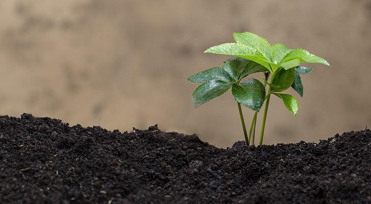 zelené rastliny, Bio, Ekológia, Príroda, Eco, prírodné, Leaf