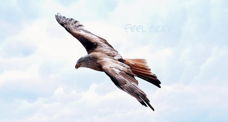 Dom, Adler, Raptor, repülés, menet közben, állat, betűtípus