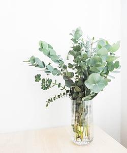 Yeşil, yaprak, bitkiler, iç, çiçek, su, Vazo