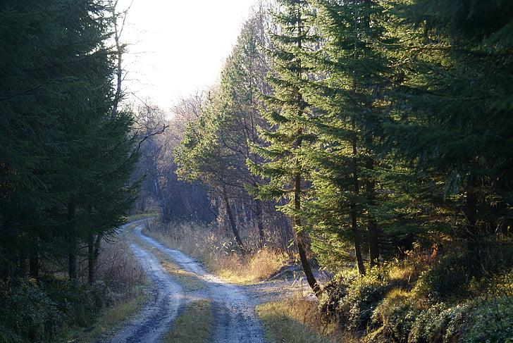 meža, meža ceļš, tūre