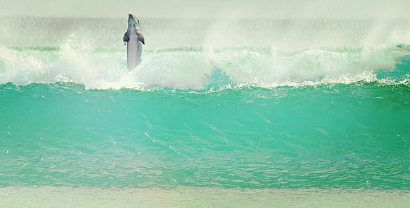 Dolphin, Sea, Aalto, nisäkkäiden, vesi, eläimet, Luonto