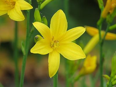 květ, Detailní záběr, zahrada, Příroda, závod, okvětní lístky, Zavřít