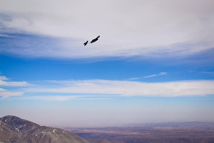 птах, небо, хмари, гори, хижаки, Сокіл, Чорний птах