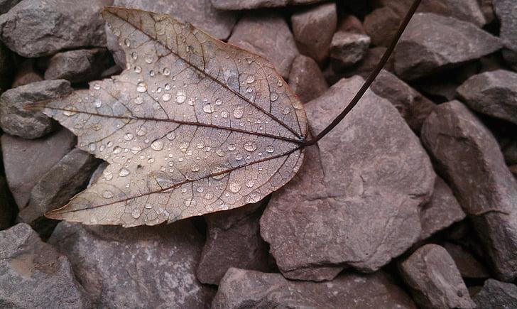 лист, падіння, мертвих, Осіннє листя, Осінь, сезон, Природа