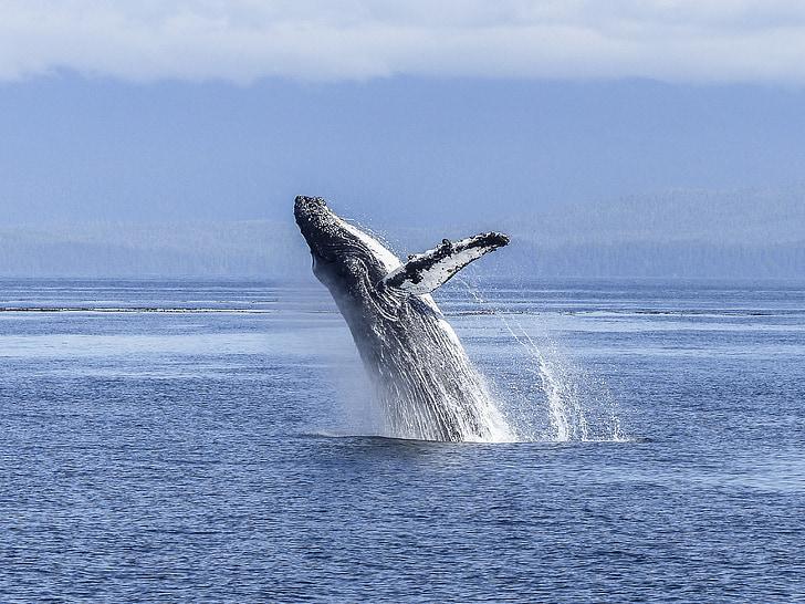 natural spectacle, nature, mammal, animal, wildlife, jumping, colossus