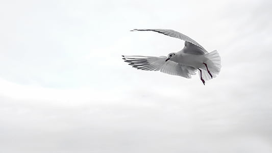 gull, wing, bird, sea, fly, venice, water bird