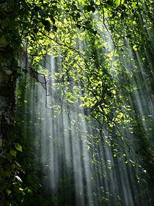 Forest, svetlo, Príroda, lúčov, Slnečné svetlo, slnečných lúčov, stromy