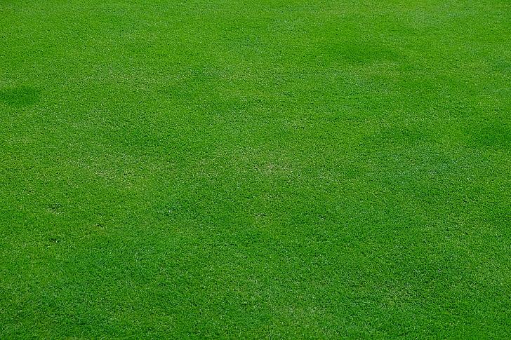 febre, Prat, herba, verd, primavera, halme, tallar la gespa
