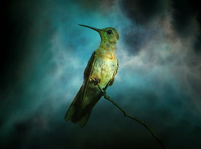 texture, background, hummingbird, bird, animal, nature, exotic