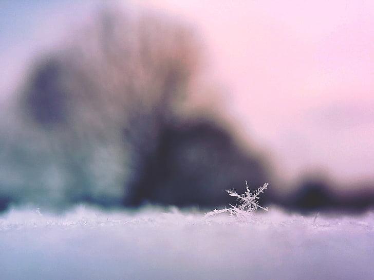 white, snow, flake, selective, focus, photography, snowflake
