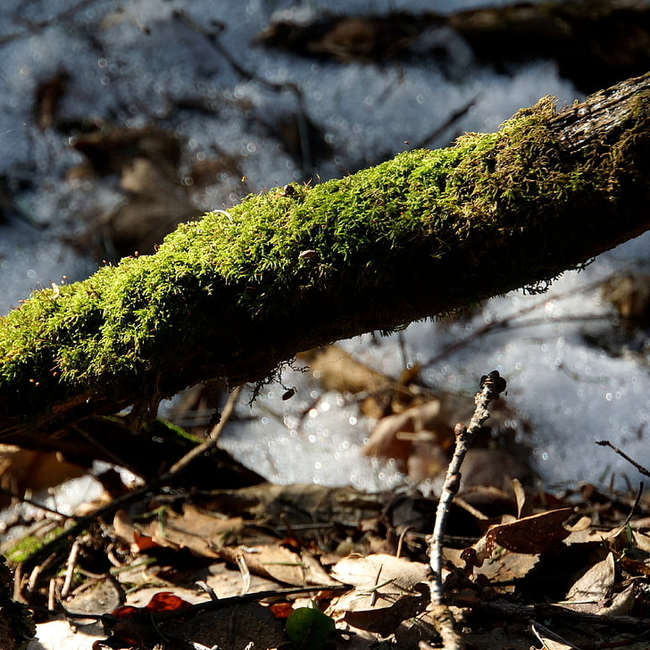 moss, mossy, old branch, moss-covered branch