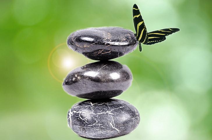 kamen, Zen, bela, Spa, rock, črna, rastlin