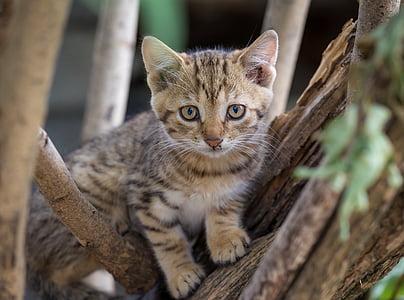 adorable, animal, blur, cat, close-up, cute, domestic