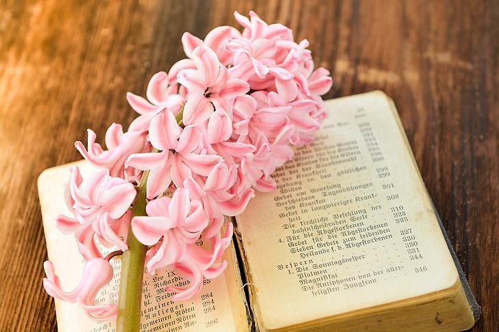 eceng gondok, bunga, bunga, merah muda, wangi bunga, wangi, bunga musim semi