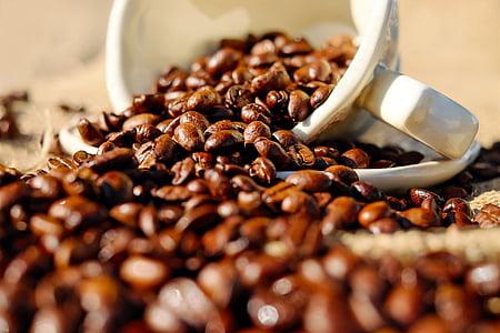 cafeïna, cafè, grans de cafè, Copa, tassa
