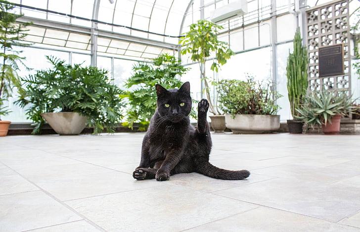 zwart, kat, in de buurt van, groen, Indoor, planten, gebouw
