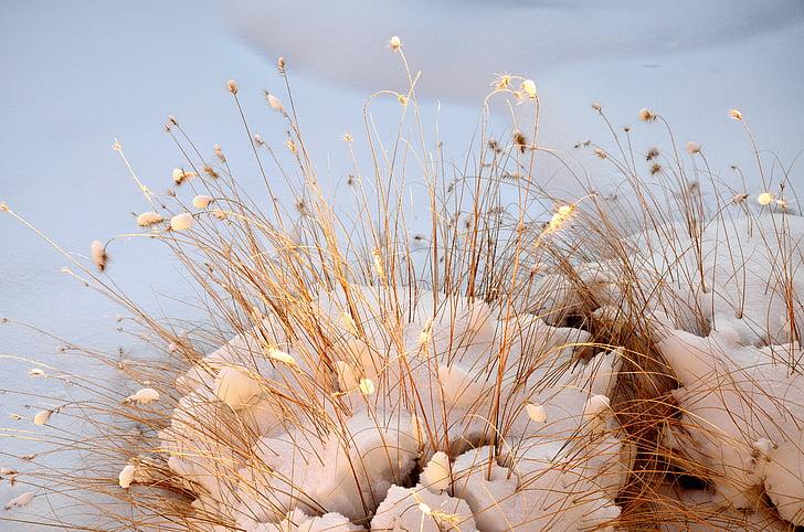 trave, narave, pozimi, razpoloženje, sneg