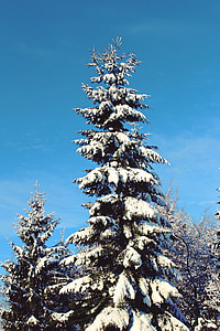 winter, snow, tree, wintry, white, cold, forest