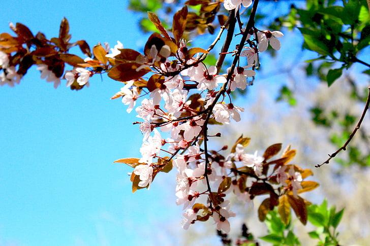 Пролет, цвете, признаци на пролетта, Градина, Блосъм, Блум