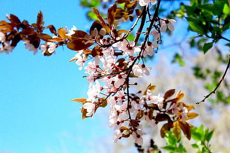 våren, blomst, tegn på våren, hage, Blossom, blomst