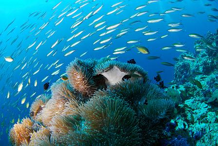 diving, underwater, sea, scuba, reef, nature, animal