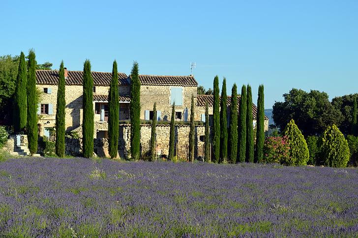 paisatge, Provença, lavanda, França, natura, camps, Droma