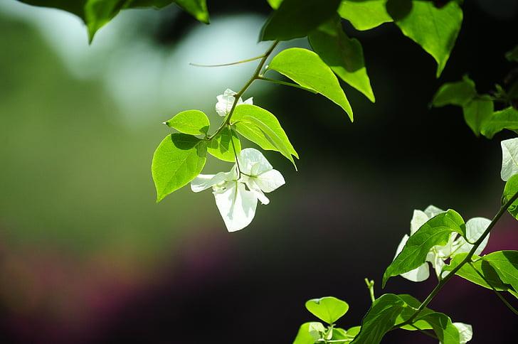 fotografije narave, čudovito naravo, podoba lepoto cvetje