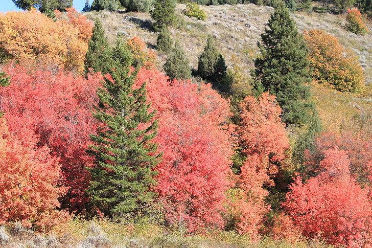 tardor, Montana, EUA, natura