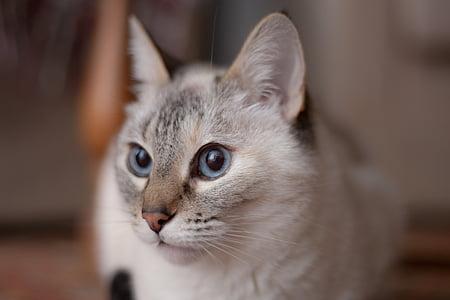 cat, animal, domestic cat, cat's eyes, sweet
