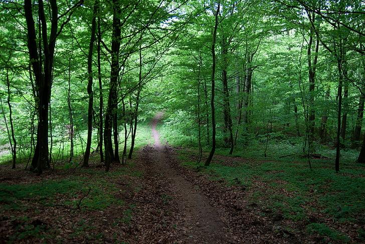 meža, zaļa, koks, meža ceļa, ceļš