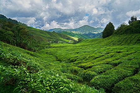 montanha, natureza, Taylor, árvore, grama, nuvem, Primavera