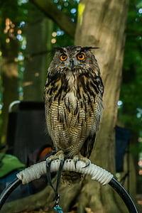 bird of prey, nature, bird, animal, birds, feathers