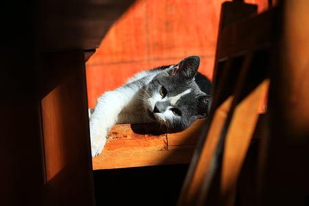 cat, animals, pet, rest, pets, domestic Cat, animal