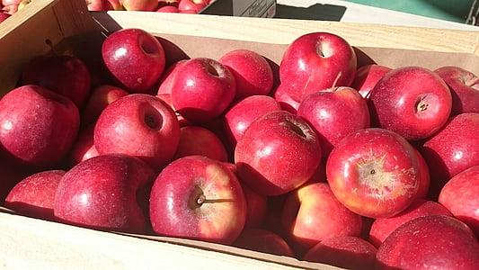 Apple, punane, võimsus, puu, Orchard, Aed, punased õunad