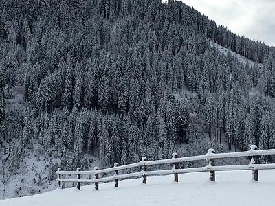 Zimní, sníh, Zimní, Zimní sen, zimní les