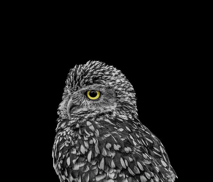 owl, animals, wild, bird, nature, wildlife, zoo