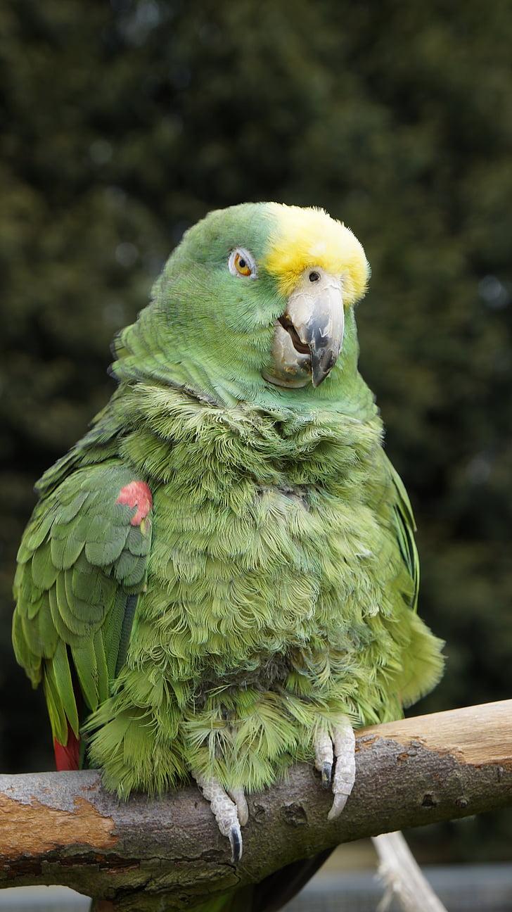 папагал, птица, животните, Зоологическа градина, природата, едно животно, животните теми