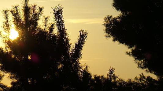 Alba, cel, morgenstimmung, cels, natura