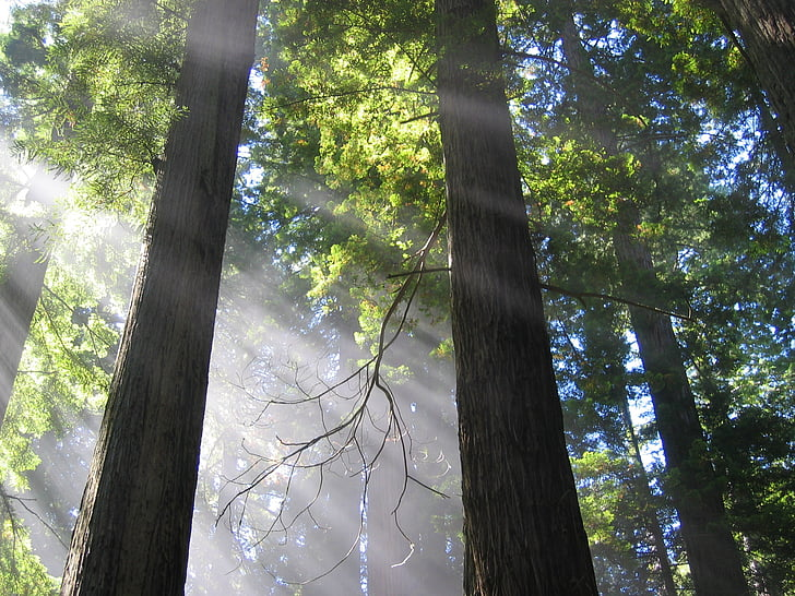 arbres, mística, atmosfèrica, llum