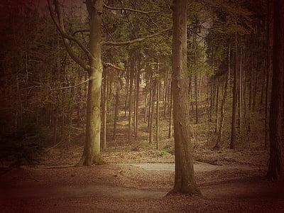 Les, strom, krajina, nálada, pohádka lesa, Příroda, lesy
