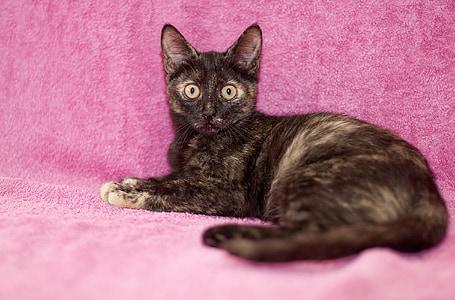 猫, ネコ科の動物, キティ, ペット, 国内, かわいい猫, 小さな