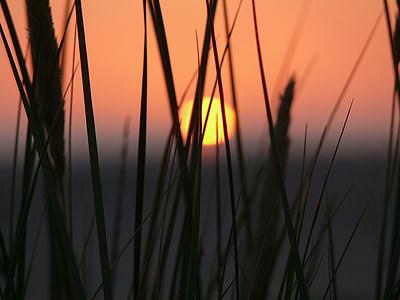 비치, 일몰, abendstimmung, 북 해, 잔디, 저녁 하늘, 로맨스